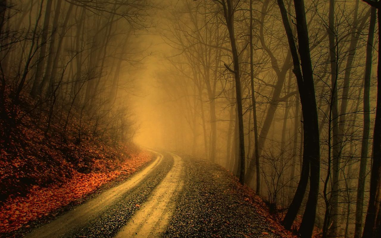 Foggy Dirt Road